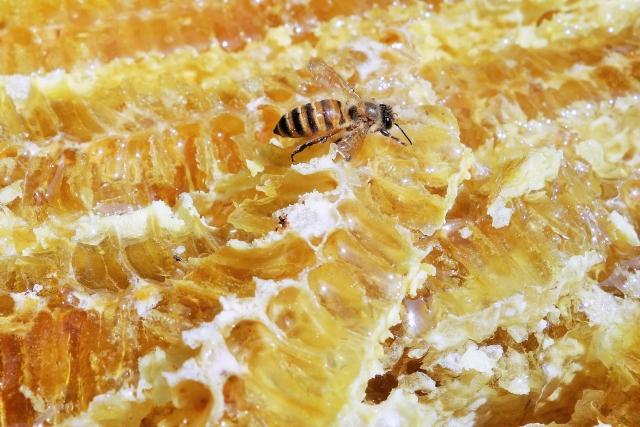 ハチミツの認知症予防効果の真実